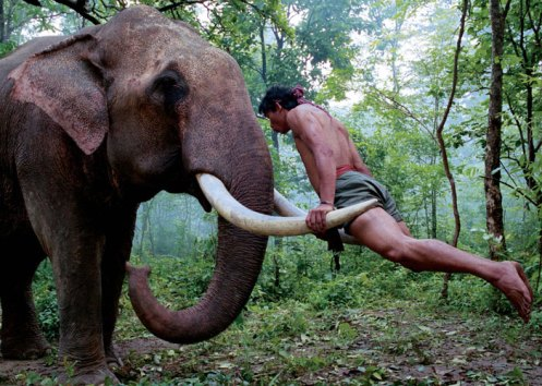 Because everyone knows elephant tusks make the best jungle gyms ^_^